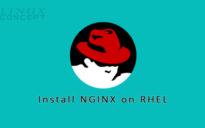How to Install Nginx on RHEL 8 (Red Hat Enterprise Linux) Operating System